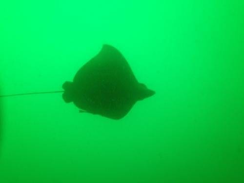 Scuba Diving with ScubaTech